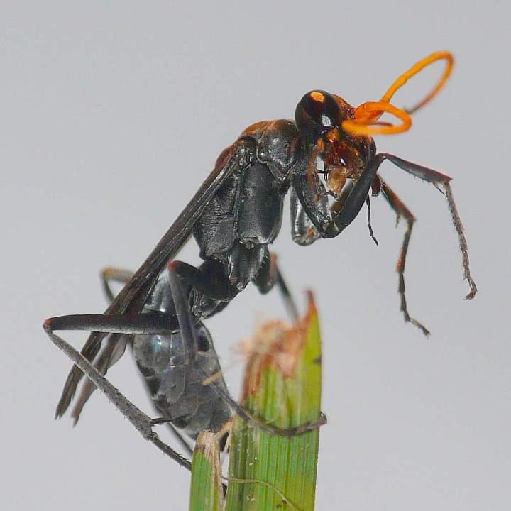 Ant Eaten