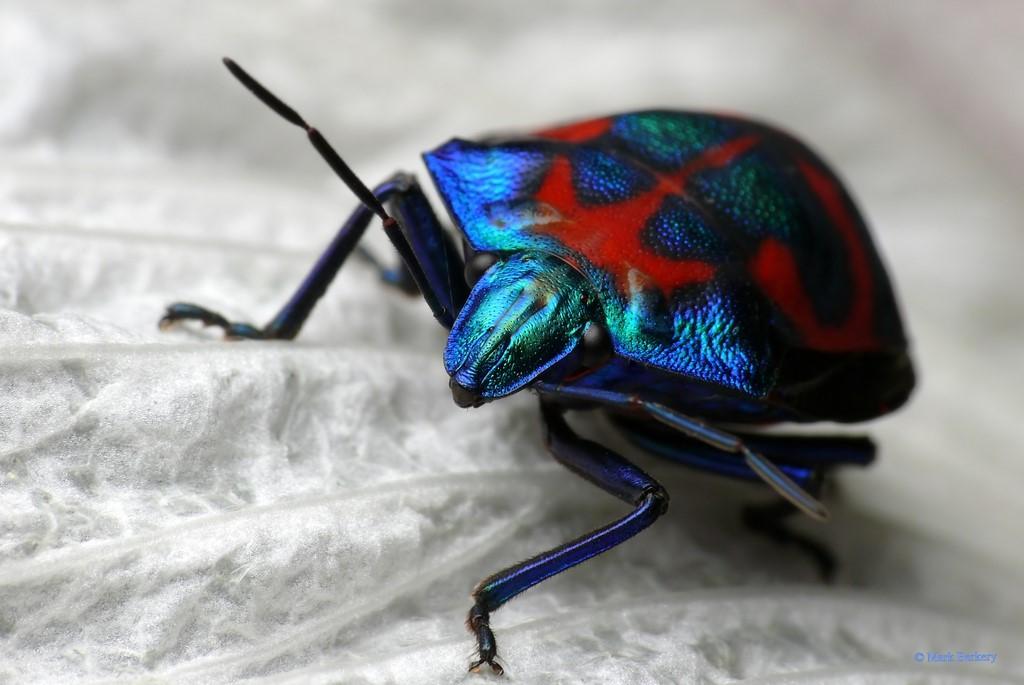 Bug while mark