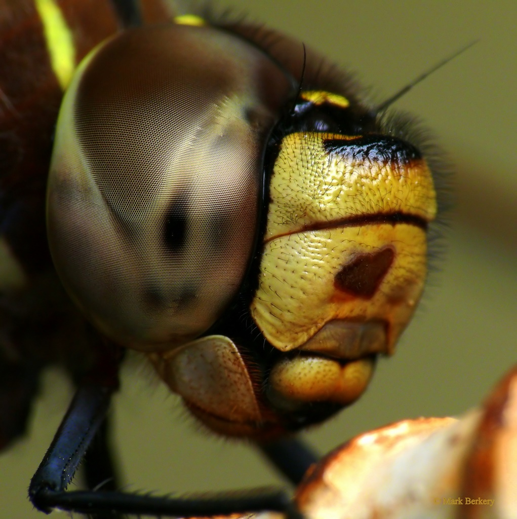 Macro Illustrated | Nature's Place