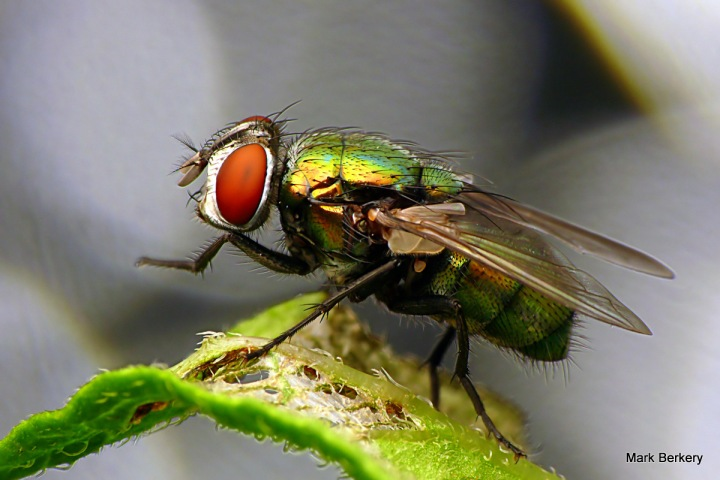 Flies, love the compost heap. Also attract predators, another form of life in the wild little nature.