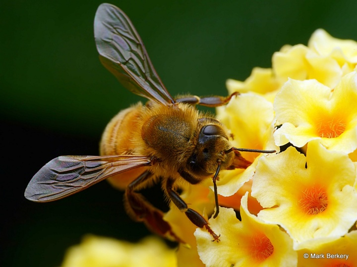 P1040720_filtered Mark Berkery